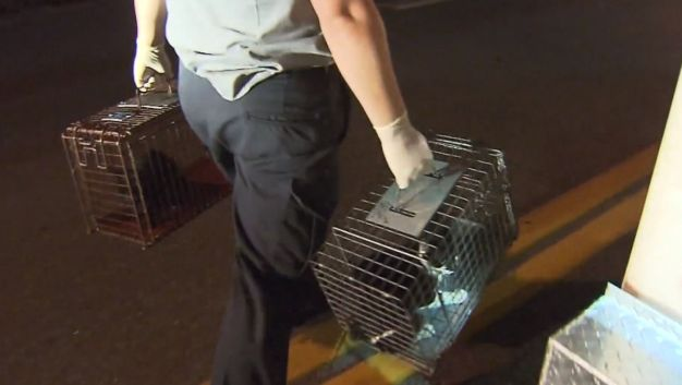50 Cats Found With Dead 91-Year-Old Woman