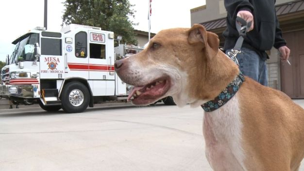 Shelter Dog Dying of Cancer Works on Bucket List