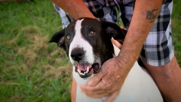 Heroic Hound Saves Owner From Rattlesnake