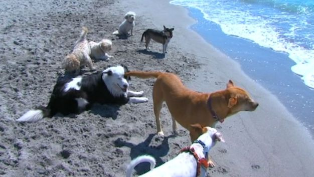 Red Tide Sickens Pets