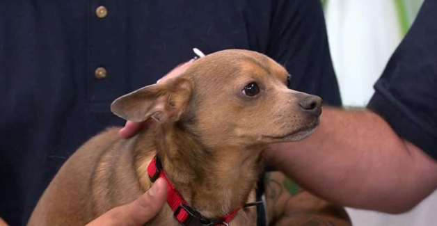 CLEAR THE SHELTERS: Cheech & Birdy
