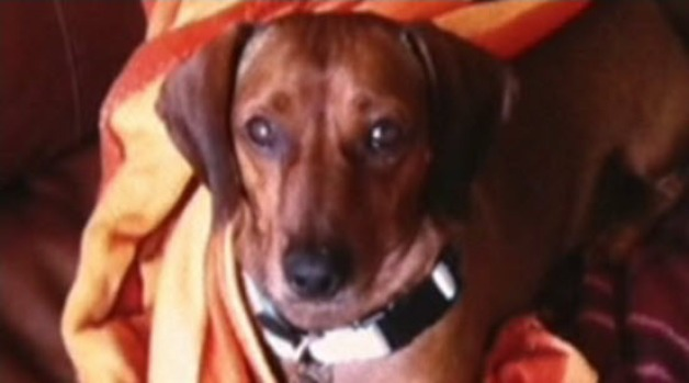 [BAY] Dog That Ate Poisonous Meatballs Dies