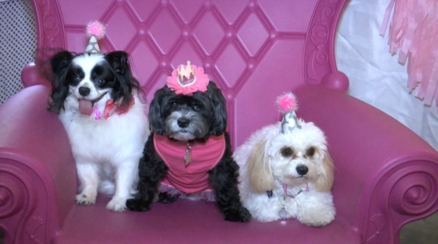 Dog Birthday Parties