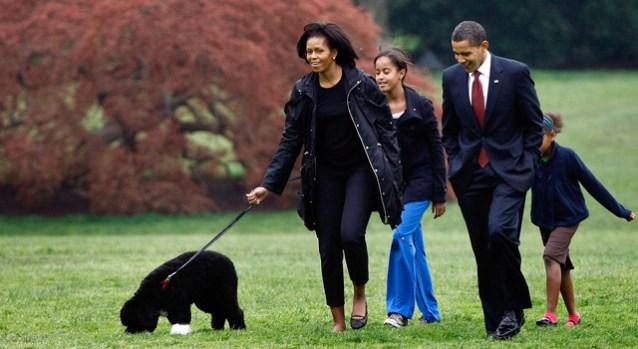 [NEWSC] First Dog Bo Arrives at White House