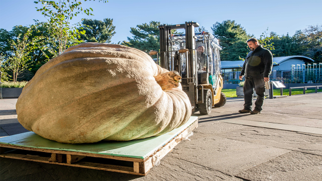 Monstrous, World-Record-Holding Pumpkin Coming to NYC
