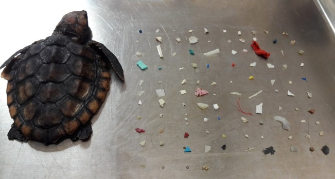 Unbelievable Animal Stories: Baby Turtle Dies From Plastic