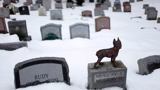 Forever With Fido: New York to Allow People to Be Buried With Pets