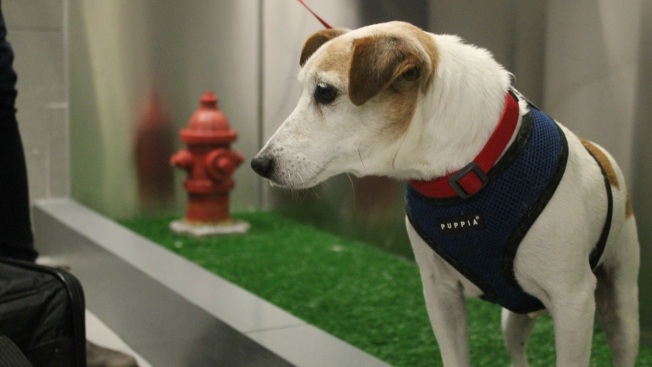 Wee-lief! Dogs Get Airport Bathroom of Their Own at JFK