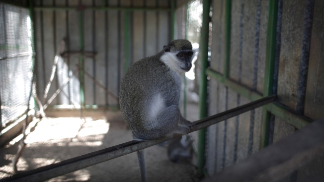 Animals Rescued From Gaza Zoo Dubbed  'The Worst in the World'