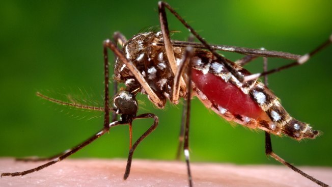 New York Offers Zika Tests to Pregnant Women Travelers