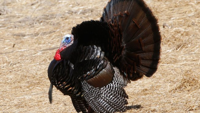 History of Thanksgiving: How Much Do You Know About Turkey Day?