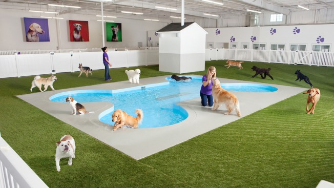 JFK Airport to Open ARK, a Luxury Animal Terminal