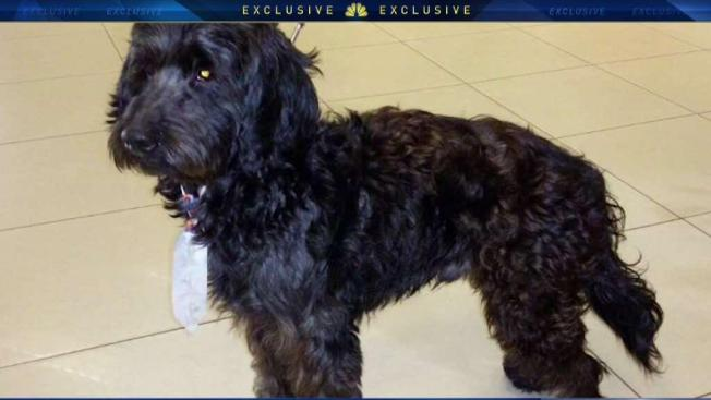 Resultado de imagen para Emotional Support Dog Booked on Flight From JFK Goes Missing