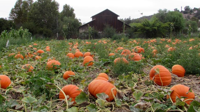 NY Grants Meant to Reduce Greenhouse Gases From Farms
