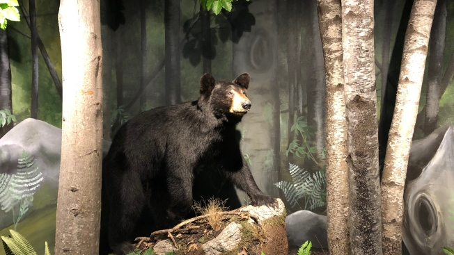 Police Warn New Jersey Residents After Bear Sighting