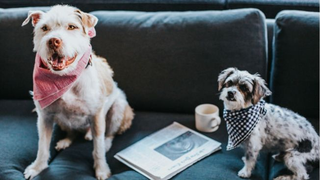 New York City Is Finally Getting Its Very First Dog Cafe