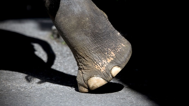 Nonprofit Seeks Personhood, Freedom for 3 Elephants at Zoo