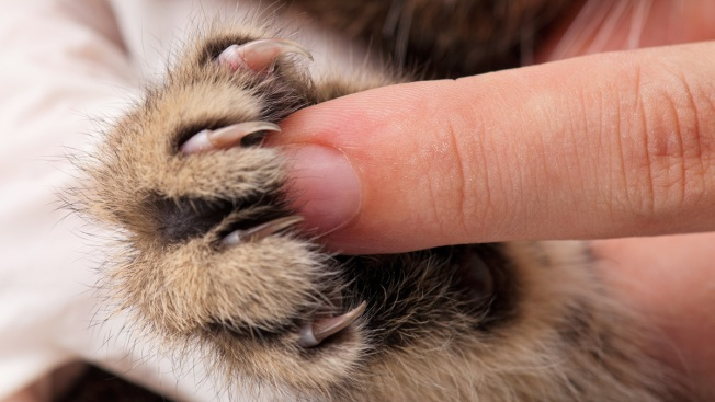 New York Legislature Passes Bill That Makes Declawing Cats Illegal