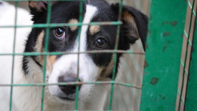New York Lawmaker: Bar Pet Stores From Buying From Puppy Mills