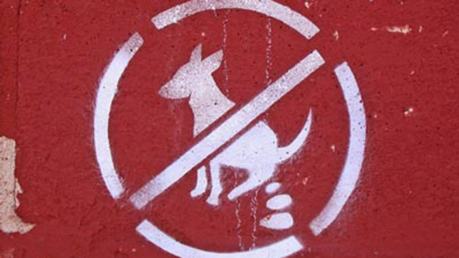 Long Island Town Proposes Fines for Dog Poop on Owners' Property: Report