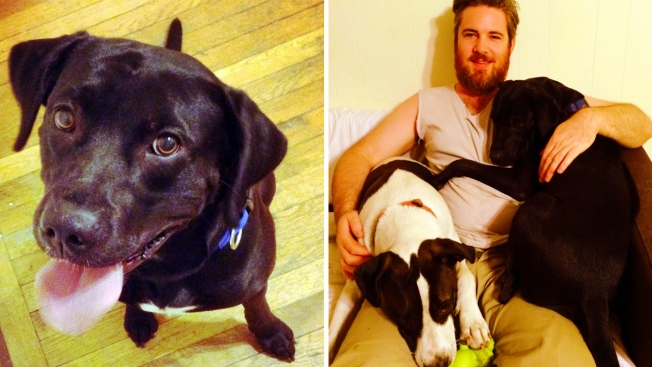 Long-Lost Dog Reunited With Brooklyn Couple 10 Months After Being Dragged Away By Car