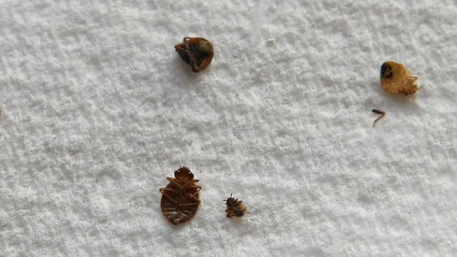 NYC Ranks as One of Top Bed Bug Cities in the Country (No Surprise Here!)