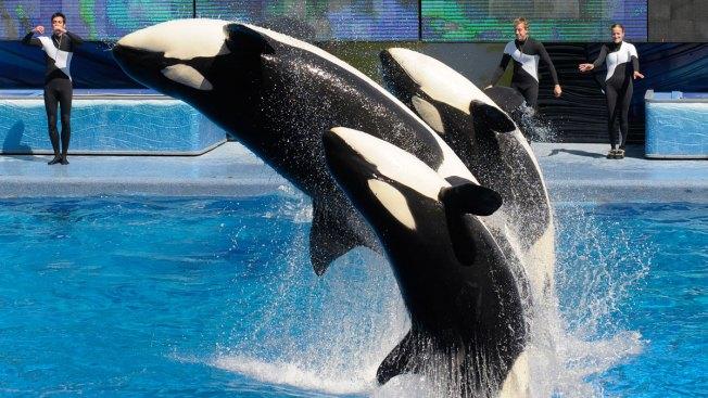 SeaWorld Admits to Spying on PETA