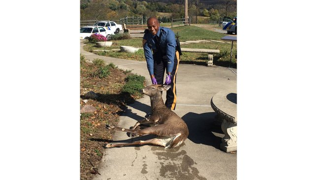 Oh Deer! New Jersey State Police Trooper Saves Drowning Buck From Swimming Pool