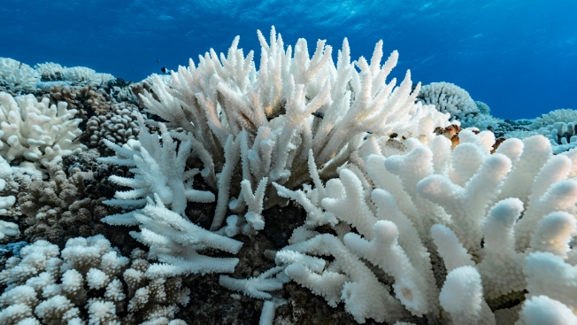 Lingering Pacific Heat Wave Threatens Hawaii Coral
