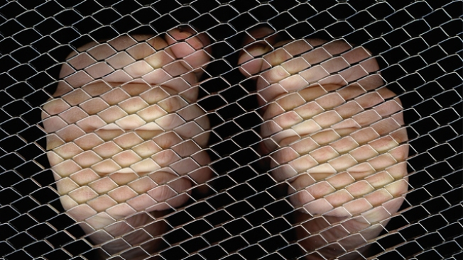 Dallas Students Forced To Cage Fight: Report
