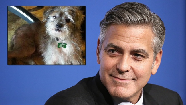 George Clooney Adopts Disabled Rescue Dog for His Parents