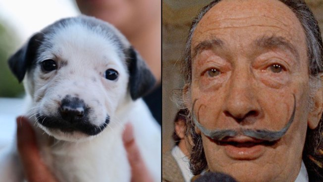 Mass. Couple Adopt Puppy Who Looks Like Salvador Dalí