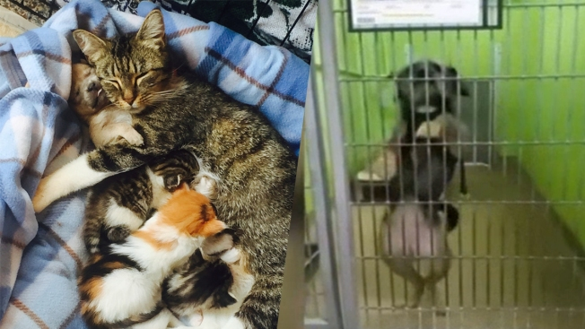Clear the Shelters: 10 Shelter Stories That Will Make You Smile