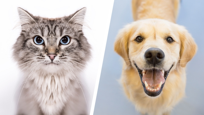 Clear the Shelters: 6 Things to Know After Adopting a Pet