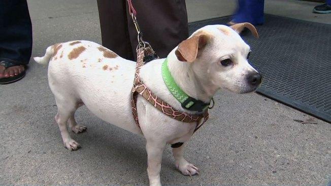 Dog Adoption Bergen County New Jersey