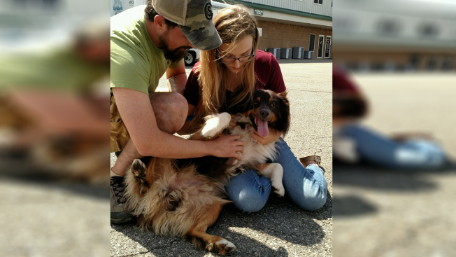 Couple Reunited With Stolen Dog After 2 Years