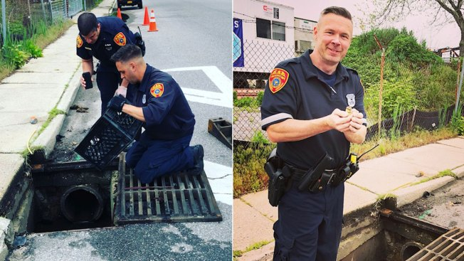 Police Use Duck Call Phone App to Rescue Ducklings From Drain