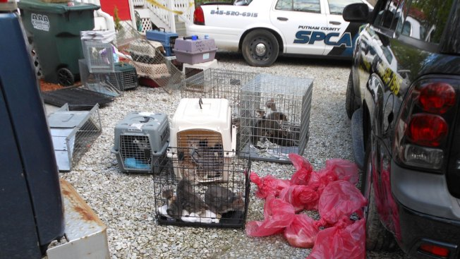 Dozens of Cats, Some Dead, Found in 'Deplorable' Putnam County Home