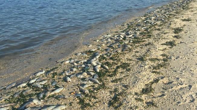 10,000 Dead Fish Found Near Long Island Bridge