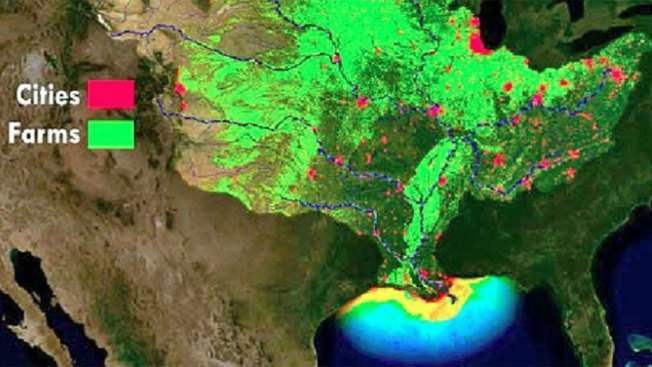 Near-Record 'Dead Zone' Predicted in Gulf of Mexico