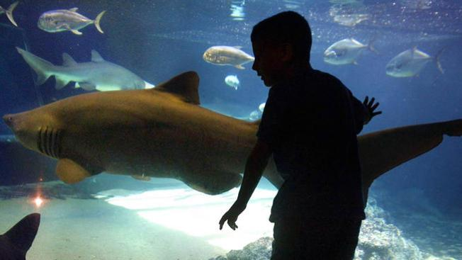 Sandy-Damaged Coney Island Aquarium Reopens This Weekend