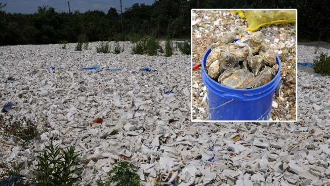 NYC Building Oyster Bed in Jamaica Bay With 5,000 Recycled Toilets