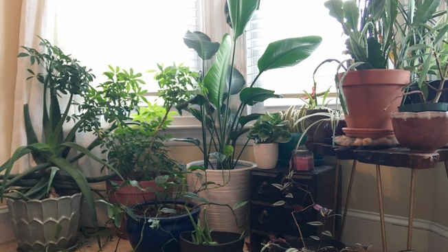 Plant Lovers Find Each Other at Swaps, Online or in Person