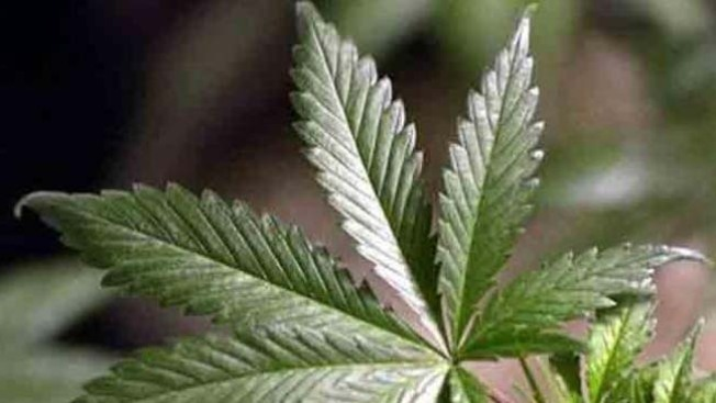 In Albany, Lawmakers Pivot to Legal Pot, Rent Rules