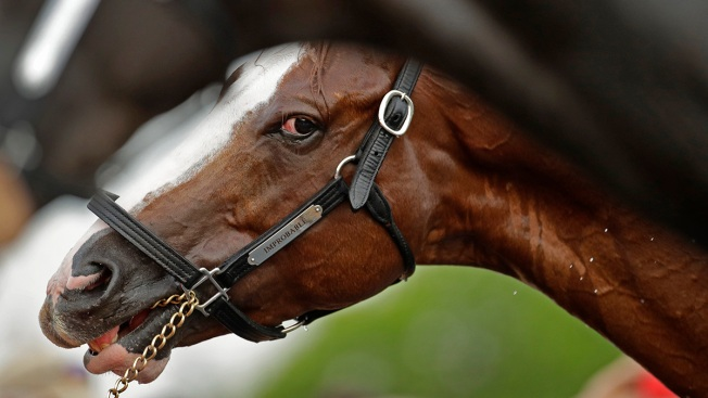 Horse Racing's Uncomfortable Truth: Horses Die