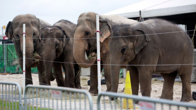 Ringling Bros. elephants to get an early retirement