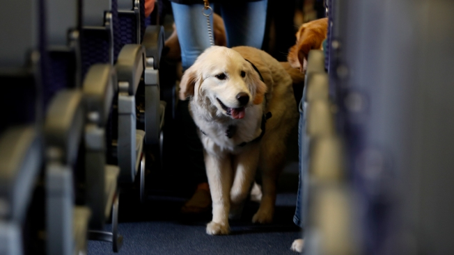 New Federal Guidelines Issued for Service, Emotional Animals on Planes