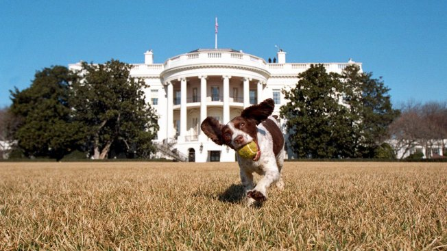A Vacant White House Job: First Pet