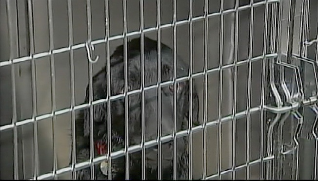 New Leash on Life for Group of Abused Dogs