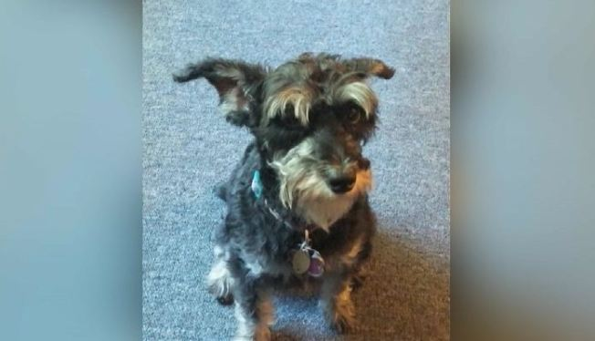 Dog Stolen by New Jersey Burglars Found Safe, Returned to Owners